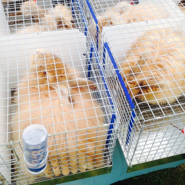 Powhatan Fiber Festival - Bunnies