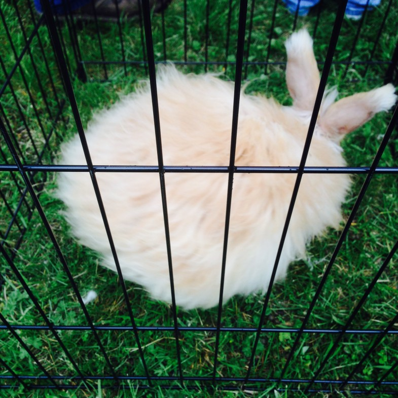 Powhatan Fiber Festival - Fluffy Bunny